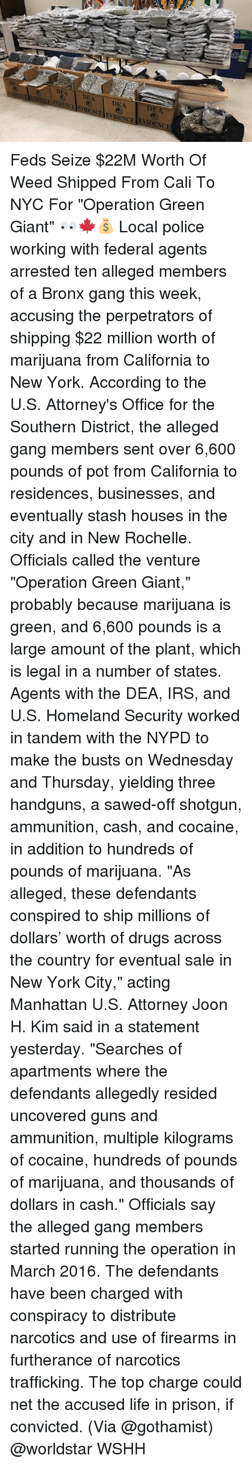 """attorneys: DEA DEA DEA  ENCE FVACEENDENCE ENIDENCE EVIDENCIE  2  DEA Feds Seize $22M Worth Of Weed Shipped From Cali To NYC For """"Operation Green Giant"""" 👀🍁💰 Local police working with federal agents arrested ten alleged members of a Bronx gang this week, accusing the perpetrators of shipping $22 million worth of marijuana from California to New York. According to the U.S. Attorney's Office for the Southern District, the alleged gang members sent over 6,600 pounds of pot from California to residences, businesses, and eventually stash houses in the city and in New Rochelle. Officials called the venture """"Operation Green Giant,"""" probably because marijuana is green, and 6,600 pounds is a large amount of the plant, which is legal in a number of states. Agents with the DEA, IRS, and U.S. Homeland Security worked in tandem with the NYPD to make the busts on Wednesday and Thursday, yielding three handguns, a sawed-off shotgun, ammunition, cash, and cocaine, in addition to hundreds of pounds of marijuana. """"As alleged, these defendants conspired to ship millions of dollars' worth of drugs across the country for eventual sale in New York City,"""" acting Manhattan U.S. Attorney Joon H. Kim said in a statement yesterday. """"Searches of apartments where the defendants allegedly resided uncovered guns and ammunition, multiple kilograms of cocaine, hundreds of pounds of marijuana, and thousands of dollars in cash."""" Officials say the alleged gang members started running the operation in March 2016. The defendants have been charged with conspiracy to distribute narcotics and use of firearms in furtherance of narcotics trafficking. The top charge could net the accused life in prison, if convicted. (Via @gothamist) @worldstar WSHH"""
