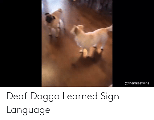 deaf: Deaf Doggo Learned Sign Language