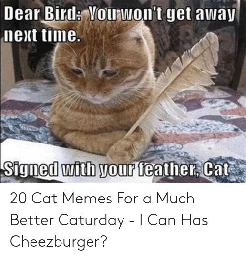 Caturday Meme: Dear Bird: Vouawon't get awa  next tiime  th your teather Cat 20 Cat Memes For a Much Better Caturday - I Can Has Cheezburger?