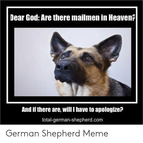 God, Heaven, and Meme: Dear God: Are there mailmen in Heaven?  And if there are, will I have to apologize?  total-german-shepherd.com German Shepherd Meme