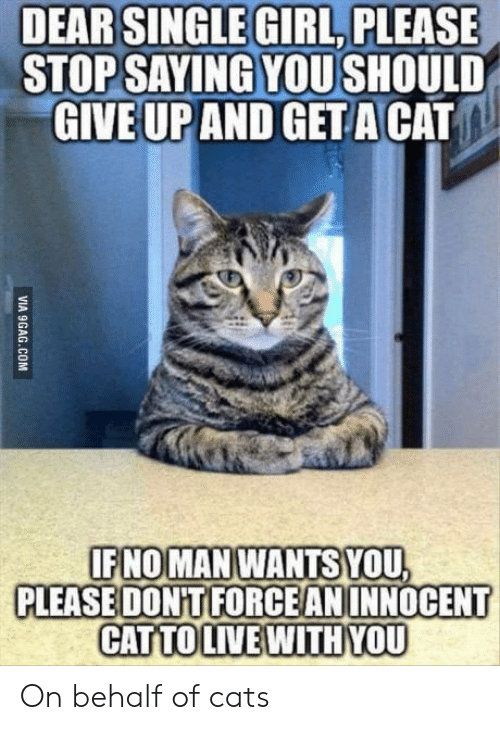 girl please: DEAR SINGLE GIRL, PLEASE  STOP SAYING YOU SHOULD  AND GET A CAT  GIVE UP  IFNOMAN WANTS YOU  PLEASE DONTIFORCEANINNOCENT  CATTOLIVEWITHYOU On behalf of cats