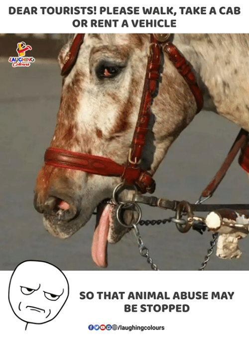 Animal, Indianpeoplefacebook, and Animal Abuse: DEAR TOURISTS! PLEASE WALK, TAKE A CAB  OR RENT A VEHICLE  GHINO  SO THAT ANIMAL ABUSE MAY  BE STOPPED  0OOO®/laughingcolours
