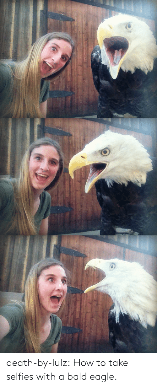Eagle: death-by-lulz: How to take selfies with a bald eagle.