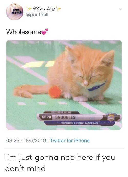 Iphone, Twitter, and Wholesome: DEATHS  @poufball  Wholesome  OF 70  SNUGGLES  FAVORITE HOBBY: NAPPING  03:23-18/5/2019 Twitter for iPhone I'm just gonna nap here if you don't mind