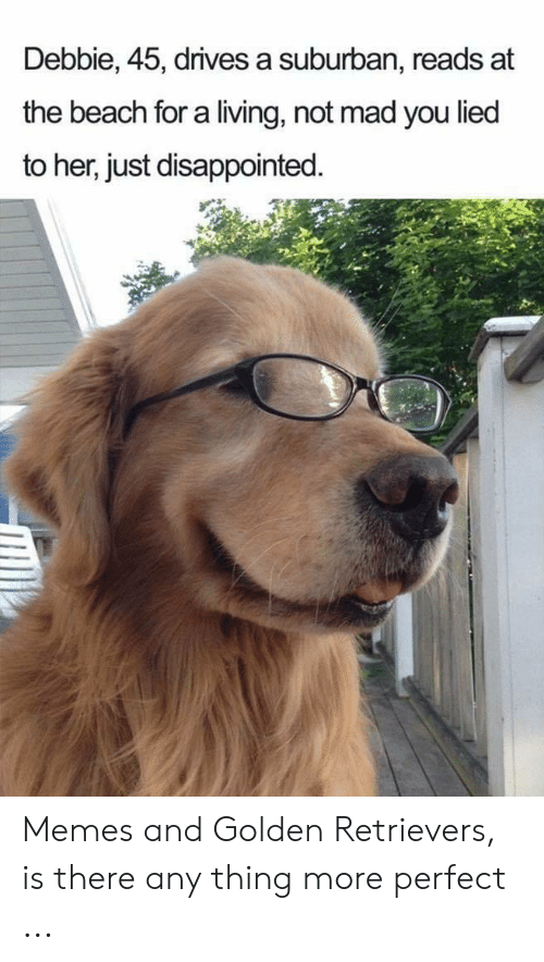Disappointed, Memes, and Beach: Debbie, 45, drives a suburban, reads at  the beach for a living, not mad you lied  to her, just disappointed. Memes and Golden Retrievers, is there any thing more perfect ...