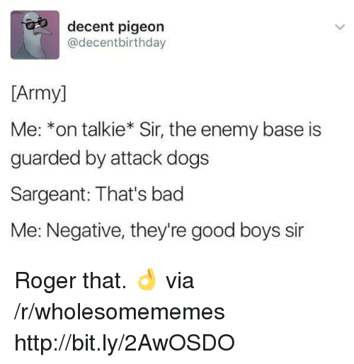 Bad, Dogs, and Roger: decent pigeon  @decentbirthday  [Army]  Me: *on talkie* Sir, the enemy base is  guarded by attack dogs  Sargeant: That's bad  Me: Negative, they're good boys sir Roger that. 👌 via /r/wholesomememes http://bit.ly/2AwOSDO