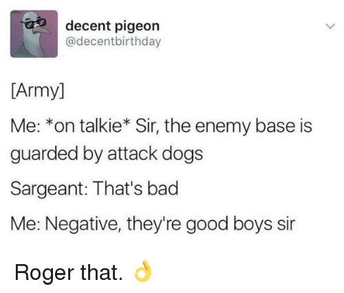 Bad, Dogs, and Roger: decent pigeon  @decentbirthday  [Army]  Me: *on talkie* Sir, the enemy base is  guarded by attack dogs  Sargeant: That's bad  Me: Negative, they're good boys sir Roger that. 👌