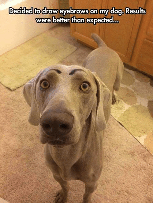 Dog, Eyebrows, and Expected: Decided fo draw eyebrows On my dog. Results  were better than expected..
