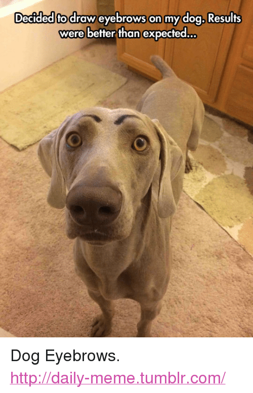 """Meme, Tumblr, and Http: Decided fodraw eyebrows on mydog Resulfs  were better than expected... <p>Dog Eyebrows.<br/><a href=""""http://daily-meme.tumblr.com""""><span style=""""color: #0000cd;""""><a href=""""http://daily-meme.tumblr.com/"""">http://daily-meme.tumblr.com/</a></span></a></p>"""