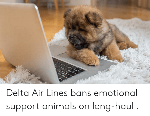 Animals, Delta, and Air: Delta Air Lines bans emotional support animals on long-haul .