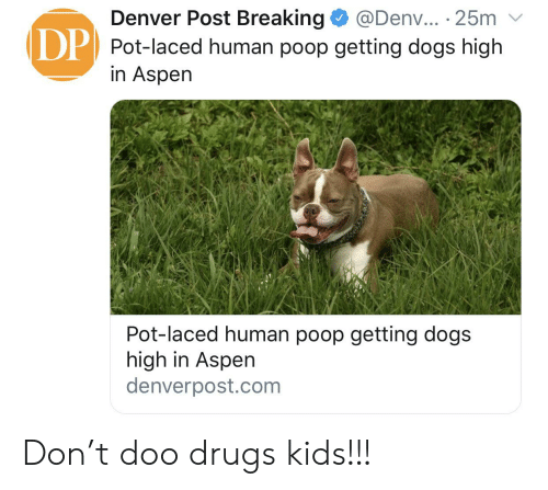 Denver Post Breaking Pot-Laced Human Poop Getting Dogs High in Aspen