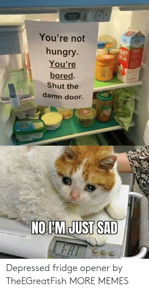 Opener: Depressed fridge opener by TheEGreatFish MORE MEMES