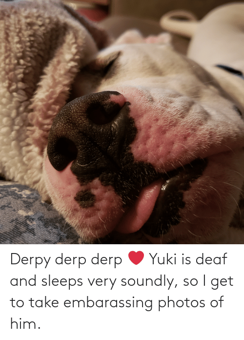 deaf: Derpy derp derp ❤ Yuki is deaf and sleeps very soundly, so I get to take embarassing photos of him.