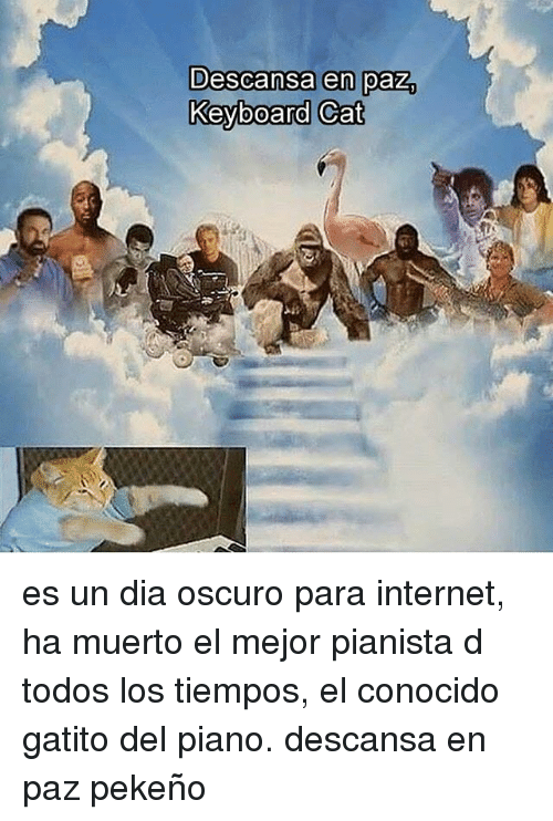 Internet, Keyboard, and Piano: Descansa en paz.  Keyboard Cat es un dia oscuro para internet, ha muerto el mejor pianista d todos los tiempos, el conocido gatito del piano. descansa en paz pekeño