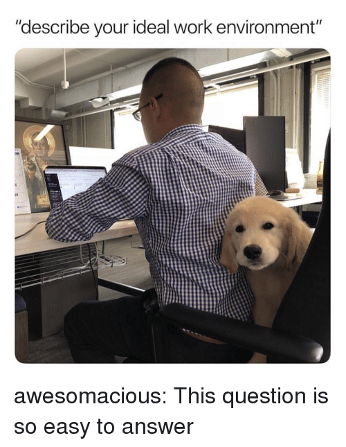 "Tumblr, Work, and Blog: ""describe your ideal work environment""  10 awesomacious:  This question is so easy to answer"