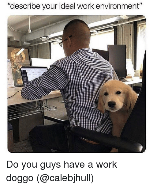 """Memes, Work, and 🤖: """"describe your ideal work environment"""" Do you guys have a work doggo (@calebjhull)"""