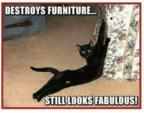 Furniture, Fabulous, and Still: DESTROYS FURNITURE...  STILL LOOKS FABULOUS!