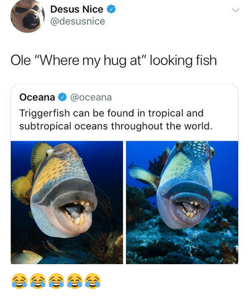 """Fish, World, and Girl Memes: Desus Nice  @desusnice  Ole """"Where my hug at"""" looking fish  Oceana @oceana  Triggerfish can be found in tropical and  subtropical oceans throughout the world 😂😂😂😂😂"""