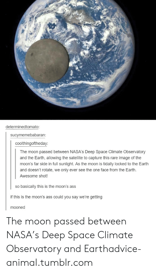 We Only: determinedtomato:  sucymemebabaran:  coolthingoftheday:  The moon passed between NASA's Deep Space Climate Observatory  and the Earth, allowing the satellite to capture this rare image of the  moon's far side in full sunlight. As the moon is tidally locked to the Earth  and doesn't rotate, we only ever see the one face from the Earth.  Awesome shot!  so basically this is the moon's ass  if this is the moon's ass could you say we're getting  mooned The moon passed between NASA's Deep Space Climate Observatory and Earthadvice-animal.tumblr.com