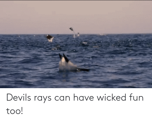 Wicked: Devils rays can have wicked fun too!