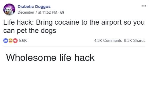 Dogs, Life, and Life Hack: Diabetic Doggos  December 7 at 11:52 PM-  Life hack: Bring cocaine to the airport so you  can pet the dogs  035.6K  4.3K Comments 8.3K Shares Wholesome life hack