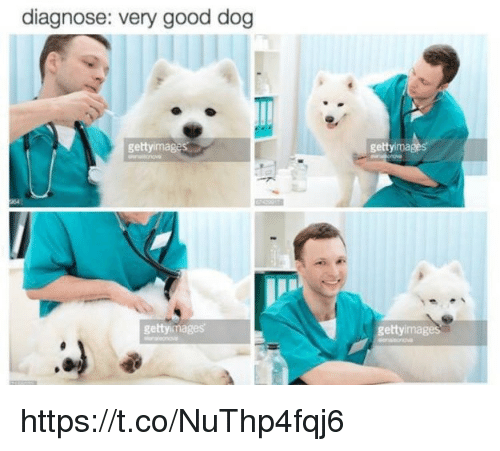 imags: diagnose: very good dog  getty imag  gettyimages  gettyima  gettyimage https://t.co/NuThp4fqj6