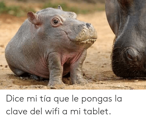 Memes, Tablet, and Dice: Dice mi tía que le pongas la clave del wifi a mi tablet.