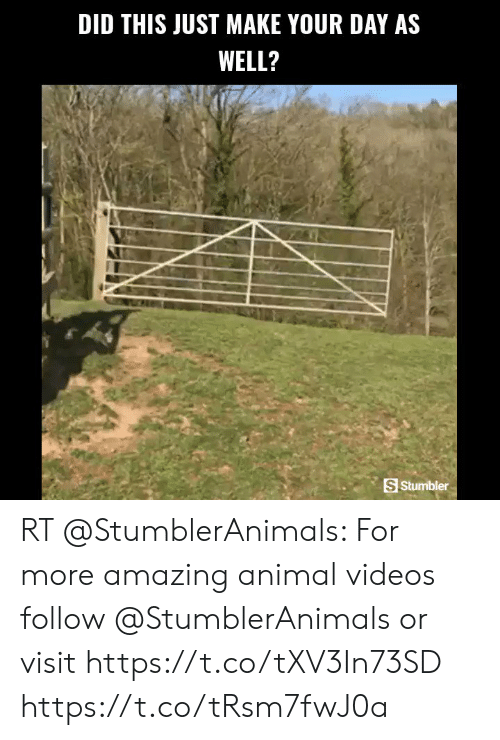 Animal Videos: DID THIS JUST MAKE YOUR DAY AS  WELL?  S Stumbler RT @StumblerAnimals: For more amazing animal videos follow @StumblerAnimals or visit https://t.co/tXV3In73SD https://t.co/tRsm7fwJ0a