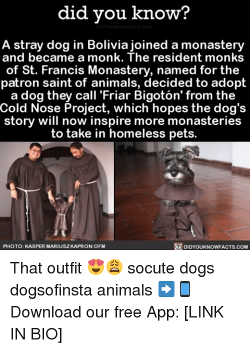 """Patrone: did you know?  A stray dog in Bolivia joined a monastery  and became a monk. The resident monks  of St. Francis Monastery, named for the  patron saint of animals, decided to adopt  a dog they call """"Friar Bigoton' from the  Cold Nose Project, which hopes the dog's  story will now inspire more monasteries  to take in homeless pets.  DIDYOUKNOWFACTS.coM  PHOTO: KASPER MARIUSZKAPRONOFM That outfit 😍😩 socute dogs dogsofinsta animals ➡📱Download our free App: [LINK IN BIO]"""