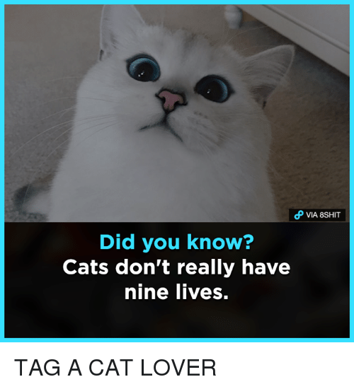 cat lover: Did you know?  Cats don't really have  nine lives. TAG A CAT LOVER