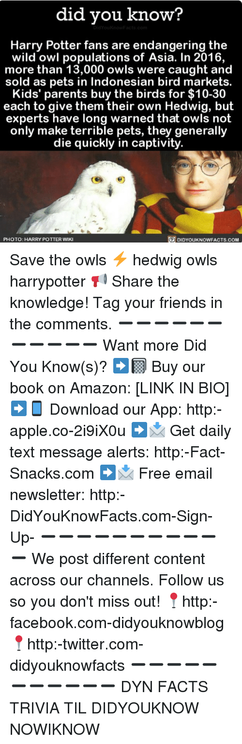 Amazon, Apple, and Facebook: did you know?  Harry Potter fans are endangering the  wild owl populations of Asia. In 2016,  more than 13,000 owls were caught and  sold as pets in Indonesian bird markets.  Kids' parents buy the birds for $10-30  each to give them their own Hedwig, but  experts have long warned that owls not  only make terrible pets, they generally  die quickly in captivity.  PHOTO: HARRY POTTER WIKI  DIDYOUKNOWFACTS.COM Save the owls ⚡️ hedwig owls harrypotter 📢 Share the knowledge! Tag your friends in the comments. ➖➖➖➖➖➖➖➖➖➖➖ Want more Did You Know(s)? ➡📓 Buy our book on Amazon: [LINK IN BIO] ➡📱 Download our App: http:-apple.co-2i9iX0u ➡📩 Get daily text message alerts: http:-Fact-Snacks.com ➡📩 Free email newsletter: http:-DidYouKnowFacts.com-Sign-Up- ➖➖➖➖➖➖➖➖➖➖➖ We post different content across our channels. Follow us so you don't miss out! 📍http:-facebook.com-didyouknowblog 📍http:-twitter.com-didyouknowfacts ➖➖➖➖➖➖➖➖➖➖➖ DYN FACTS TRIVIA TIL DIDYOUKNOW NOWIKNOW