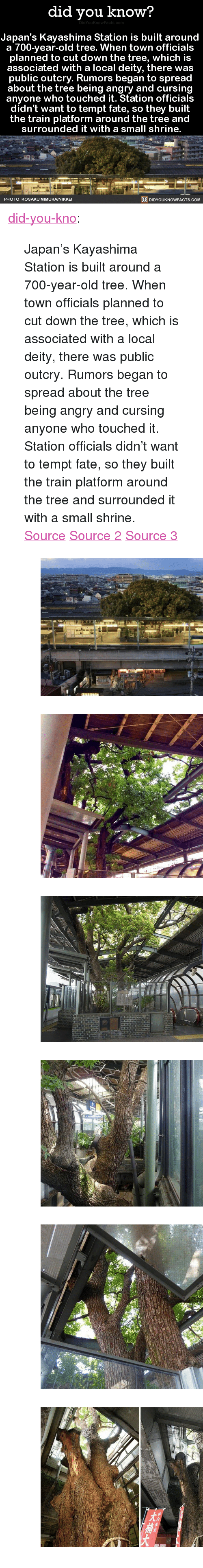 """Tumblr, Blog, and Http: did you know?  Japan's Kayashima Station is built around  a 700-vear-old tree. When town officials  planned to cut down the tree, which is  associated with a local deity, there was  public outcry. Rumors began to spread  about the tree being angry and cursin  anyone who touched it. Station officials  didn't want to tempt fate, so they built  the train platform around the tree and  surrounded it with a small shrine.  PHOTO: KOSAKU MIMURA/NIKKE  DIDYOUKNOWFACTS.CoM <p><a href=""""http://didyouknowblog.com/post/158719101556/japans-kayashima-station-is-built-around-a"""" class=""""tumblr_blog"""">did-you-kno</a>:</p> <blockquote> <p>Japan's Kayashima Station is built around  a 700-year-old tree. When town officials  planned to cut down the tree, which is  associated with a local deity, there was  public outcry. Rumors began to spread  about the tree being angry and cursing  anyone who touched it. Station officials  didn't want to tempt fate, so they built  the train platform around the tree and  surrounded it with a small shrine.  <a href=""""http://www.spoon-tamago.com/2017/01/21/kayashima-the-japanese-train-station-built-around-a-700-year-old-tree/"""">Source</a> <a href=""""http://mymodernmet.com/kayashima-station-camphor-tree/"""">Source 2</a> <a href=""""http://www.atlasobscura.com/places/kayashima-station"""">Source 3</a></p> <figure class=""""tmblr-full"""" data-orig-height=""""339"""" data-orig-width=""""540""""><img src=""""https://78.media.tumblr.com/6db5d29da101ddfaf26022f04de5b681/tumblr_inline_on74fjj7621uy8wg3_540.jpg"""" data-orig-height=""""339"""" data-orig-width=""""540""""/></figure><figure class=""""tmblr-full"""" data-orig-height=""""403"""" data-orig-width=""""540""""><img src=""""https://78.media.tumblr.com/add8874ad450eeefd38d59773a5c0daf/tumblr_inline_on74fjyMYv1uy8wg3_540.jpg"""" data-orig-height=""""403"""" data-orig-width=""""540""""/></figure><figure class=""""tmblr-full"""" data-orig-height=""""359"""" data-orig-width=""""540""""><img src=""""https://78.media.tumblr.com/6884871ae50eed2103c666942ea81536/tumblr_inline_on74fkVp341uy8wg3_540"""