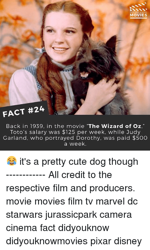 """cute dogs: DID YOU KNOW  MOVIES  FACT #24  Back in 1939, in the movie """"The Wizard of Oz,""""  Toto's salary was $125 per week, while Judy  Garland, who portrayed Dorothy, was paid $500  a week. 😂 it's a pretty cute dog though ------------ All credit to the respective film and producers. movie movies film tv marvel dc starwars jurassicpark camera cinema fact didyouknow didyouknowmovies pixar disney"""
