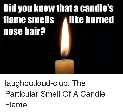 Club, Smell, and Tumblr: Did you know that a candle's  flame smells Alike burned  nose hair? laughoutloud-club:  The Particular Smell Of A Candle Flame