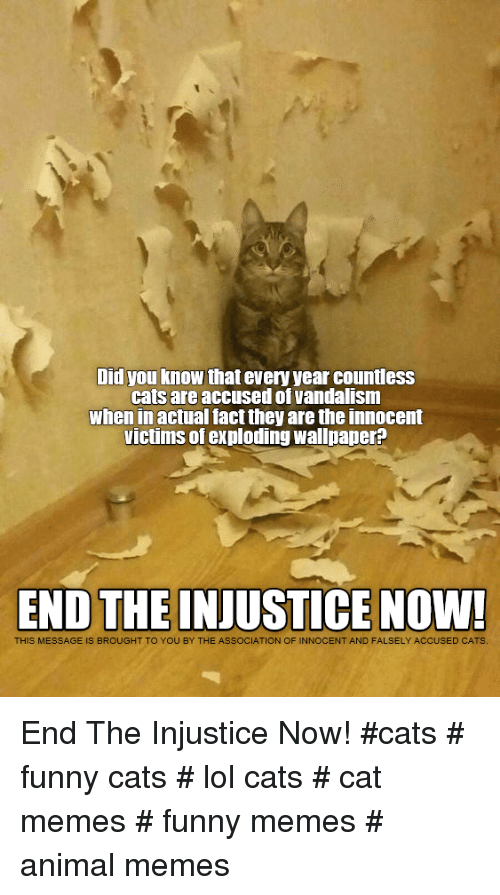 Cat Memes Funny: Did you know that every year countless  cats are accused of vandalism  when in actual fact they are the innocent  victims of exploding wallpaper?  END THE INJUSTICE NOW!  THIS MESSAGE IS BROUGHT TO YOU BY THE ASSOCIATION OF INNOCENT AND FALSELY ACCUSED CATS End The Injustice Now!  #cats # funny cats # lol cats # cat memes # funny memes # animal memes