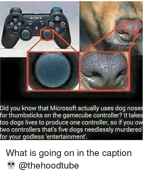 gamecube: Did you know that Microsoft actually uses dog noses  for thumbsticks on the gamecube controller? It takes  dogs lives to produce one controller, so if you ow  controllers that's five dogs needlessly murdered  too  two  for your godless 'entertainment What is going on in the caption 💀 @thehoodtube