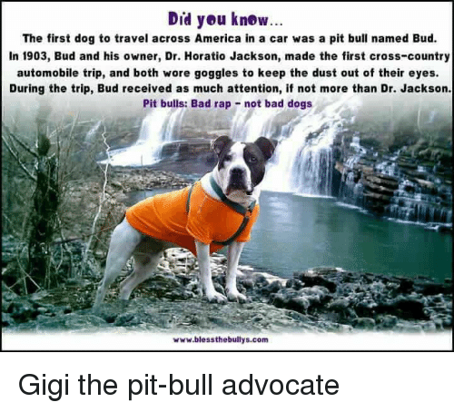 pit bulls bad rap Donna reynolds, director of the pit bull advocacy group bad rap, told abc in february for me, these many families and these millions of dogs matter a lot, in a very personal way.