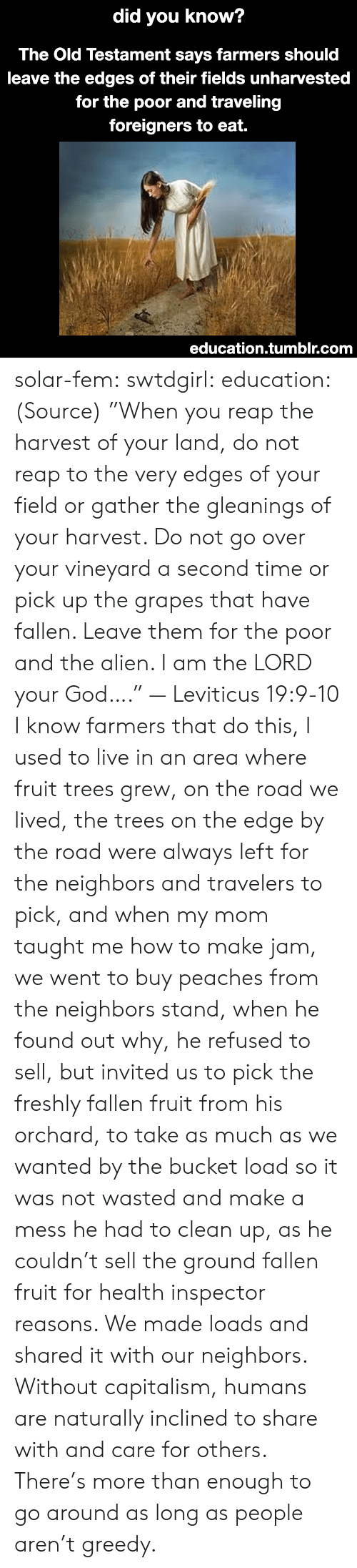 """A Mess: did  you know?  The Old Testament says farmers should  leave the edges of their fields unharvested  for the poor and traveling  foreigners to eat.  education.tumblr.com solar-fem:  swtdgirl:  education:   (Source) """"When you reap the harvest of your land, do not reap to the very edges of your field or gather the gleanings of your harvest. Do not go over your vineyard a second time or pick up the grapes that have fallen. Leave them for the poor and the alien. I am the LORD your God…."""" — Leviticus 19:9-10     I know farmers that do this, I used to live in an area where fruit trees grew, on the road we lived, the trees on the edge by the road were always left for the neighbors and travelers to pick, and when my mom taught me how to make jam, we went to buy peaches from the neighbors stand, when he found out why, he refused to sell, but invited us to pick the freshly fallen fruit from his orchard, to take as much as we wanted by the bucket load so it was not wasted and make a mess he had to clean up, as he couldn't sell the ground fallen fruit for health inspector reasons. We made loads and shared it with our neighbors.  Without capitalism, humans are naturally inclined to share with and care for others. There's more than enough to go around as long as people aren't greedy."""