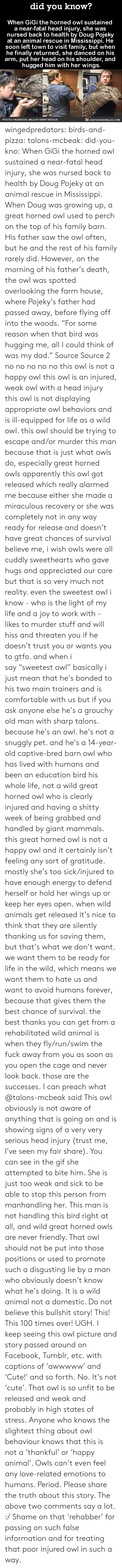 "Lived: did you know?  When GiGi the horned owl sustained  a near-fatal head injury, she was  nursed back to health by Doug Pojeky  at an animal rescue in Mississippi. He  soon left town to visit family, but when  he finally returned, she danced on his  arm, put her head on his shoulder, and  hugged him with her wings.  PHOTO: FACEBOOK, WILD AT HEART RES CUE  DIDYOUKNOWBLOG.COM wingedpredators: birds-and-pizza:  talons-mcbeak:  did-you-kno:  When GiGi the horned owl sustained  a near-fatal head injury, she was  nursed back to health by Doug Pojeky  at an animal rescue in Mississippi. When Doug was growing up, a great horned owl used to perch on the top of his family barn. His father saw the owl often, but he and the rest of his family rarely did. However, on the morning of his father's death, the owl was spotted overlooking the farm house, where Pojeky's father had passed away, before flying off into the woods. ""For some reason when that bird was hugging me, all I could think of was my dad."" Source Source 2  no no no no no this owl is not a happy owl this owl is an injured, weak owl with a head injury this owl is not displaying appropriate owl behaviors and is ill-equipped for life as a wild owl. this owl should be trying to escape and/or murder this man because that is just what owls do, especially great horned owls apparently this owl got released which really alarmed me because either she made a miraculous recovery or she was completely not in any way ready for release and doesn't have great chances of survival believe me, i wish owls were all cuddly sweethearts who gave hugs and appreciated our care but that is so very much not reality. even the sweetest owl i know - who is the light of my life and a joy to work with - likes to murder stuff and will hiss and threaten you if he doesn't trust you or wants you to gtfo. and when i say ""sweetest owl"" basically i just mean that he's bonded to his two main trainers and is comfortable with us but if you ask anyone else he's a grouchy old man with sharp talons. because he's an owl. he's not a snuggly pet. and he's a 14-year-old captive-bred barn owl who has lived with humans and been an education bird his whole life, not a wild great horned owl who is clearly injured and having a shitty week of being grabbed and handled by giant mammals. this great horned owl is not a happy owl and it certainly isn't feeling any sort of gratitude. mostly she's too sick/injured to have enough energy to defend herself or hold her wings up or keep her eyes open. when wild animals get released it's nice to think that they are silently thanking us for saving them, but that's what we don't want. we want them to be ready for life in the wild, which means we want them to hate us and want to avoid humans forever, because that gives them the best chance of survival. the best thanks you can get from a rehabilitated wild animal is when they fly/run/swim the fuck away from you as soon as you open the cage and never look back. those are the successes.  I can preach what @talons-mcbeak said  This owl obviously is not aware of anything that is going on and is showing signs of a very very serious head injury (trust me, I've seen my fair share). You can see in the gif she attempted to bite him. She is just too weak and sick to be able to stop this person from manhandling her.  This man is not handling this bird right at all, and wild great horned owls are never friendly.  That owl should not be put into those positions or used to promote such a disgusting lie by a man who obviously doesn't know what he's doing.  It is a wild animal not a domestic. Do not believe this bullshit story!   This! This 100 times over! UGH. I keep seeing this owl picture and story passed around on Facebook, Tumblr, etc. with captions of 'awwwww' and 'Cute!' and so forth. No. It's not 'cute'.  That owl is so unfit to be released and weak and probably in high states of stress. Anyone who knows the slightest thing about owl behaviour knows that this is not a 'thankful' or 'happy animal'. Owls can't even feel any love-related emotions to humans. Period. Please share the truth about this story. The above two comments say a lot. :/ Shame on that 'rehabber' for passing on such false information and for treating that poor injured owl in such a way."