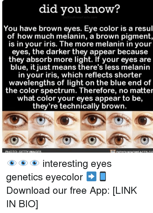 eyes color: did you know?  You have brown eyes. Eye color is a resul  of how much melanin, a brown pigment,  is in your iris. The more melanin in your  eyes, the darker they appear because  they absorb more light. If your eyes are  blue, it just means there's less melanin  in your iris, which reflects shorter  wavelengths of light on the blue end of  the color spectrum. Therefore, no matter  what color your eyes appear to be,  they're technically brown. 👁👁👁 interesting eyes genetics eyecolor ➡📱Download our free App: [LINK IN BIO]