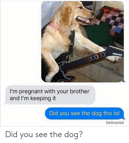 Dog: Did you see the dog?