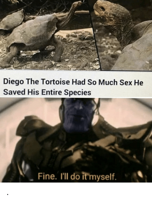 Sex, Species, and Tortoise: Diego The Tortoise Had So Much Sex He  Saved His Entire Species  Fine. I'll do it myself. .