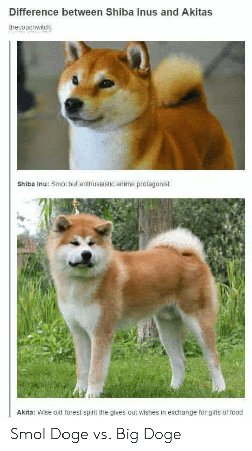 Shiba Inu: Difference between Shiba Inus and Akitas  thecouchwitch  Shiba Inu: Smol but enthusiastic anime protagonist  Li  Akita: Wise old forest spirit the gives out wishes in exchange for gifts of food Smol Doge vs. Big Doge
