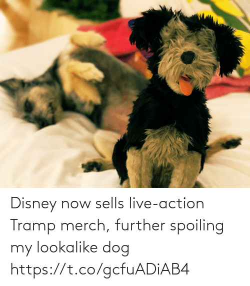tramp: Disney now sells live-action Tramp merch, further spoiling my lookalike dog https://t.co/gcfuADiAB4