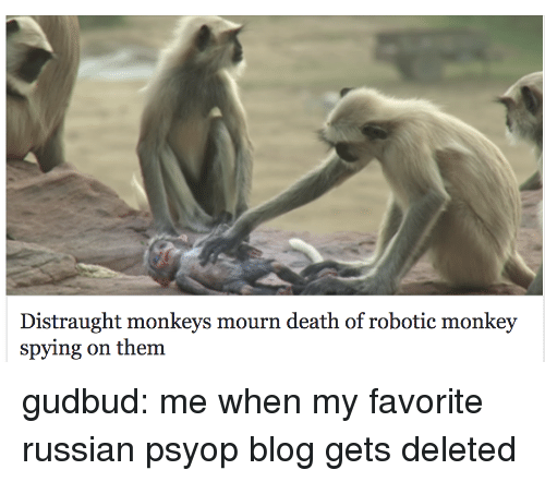 Robotic: Distraught monkeys mourn death of robotic monkey  spying on them gudbud: me when my favorite russian psyop blog gets deleted
