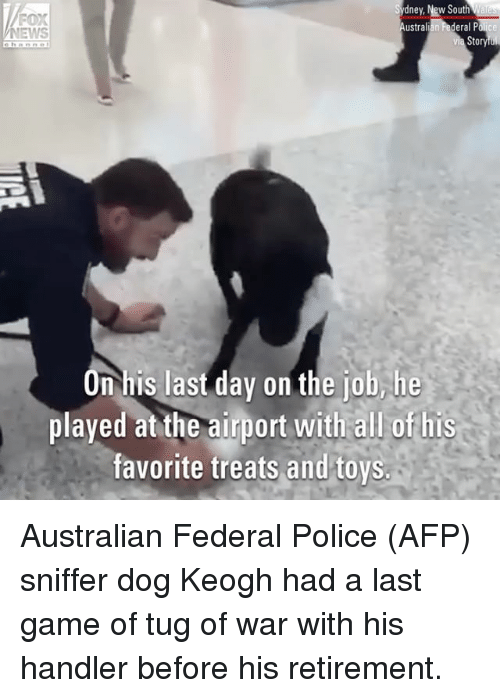 Memes, News, and Police: dney, New South  ustralian Federal P  FOX  NEWS  channe  tor  On his last day on the job,he  played at the airport with all of his  favorite treats and toys Australian Federal Police (AFP) sniffer dog Keogh had a last game of tug of war with his handler before his retirement.