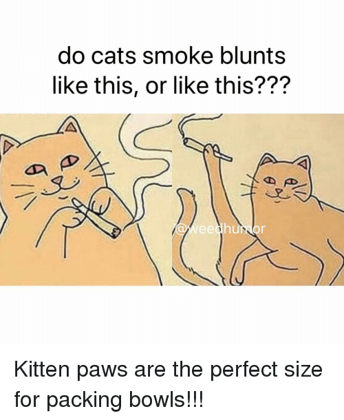 Blunts, Cats, and Weed: do cats smoke blunts  like this, or like this???  Weedhumor Kitten paws are the perfect size for packing bowls!!!