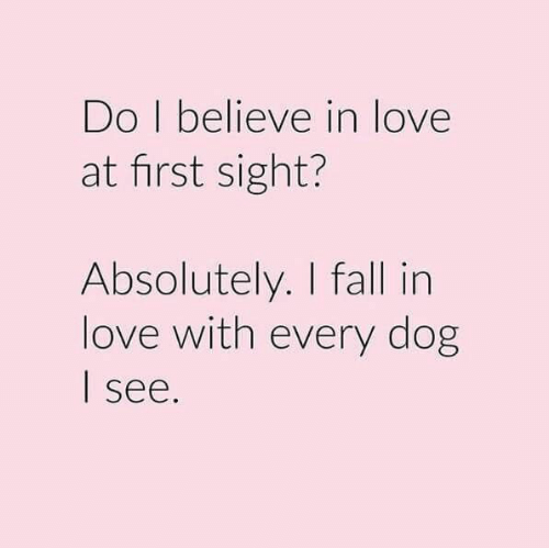 Fall, Love, and At First Sight: Do I believe in love  at first sight?  Absolutely. I fall in  love with every dog  see.