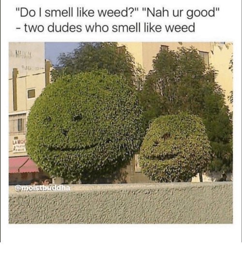 "Funny, Smell, and Weed: ""Do I smell like weed?"" ""Nah ur good""  two dudes who smell like weed  AMO"