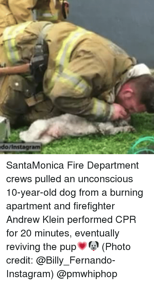 Memes, 🤖, and Cpr: do/ Instagram: SantaMonica Fire Department crews pulled an unconscious 10-year-old dog from a burning apartment and firefighter Andrew Klein performed CPR for 20 minutes, eventually reviving the pup💗🐶 (Photo credit: @Billy_Fernando- Instagram) @pmwhiphop
